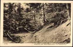 Postcard Syke Niedersachsen, Eingang zur Wolfsschlucht im Friedeholz, Waldpartie