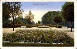 Ak Żary Sorau Niederlausitz Ostbrandenburg, Stadtpark, Blumenbeet