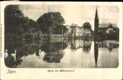 Postcard Syke Kr. Diepholz, Motiv am Mühlenteiche, Kirche, Schwäne
