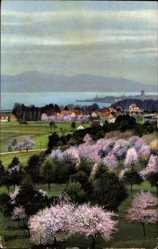 Postcard Lindau im Bodensee Schwaben, Photochromie Serie 171 Nr. 3035