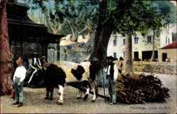 Postcard Insel Madeira Portugal, Corca de Bois, Ochsenfuhrwerk, Einheimische