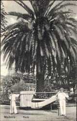 Postcard Insel Madeira Portugal, Rede, Sänftenträger, Palme