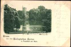 Postcard Frankfurt am Main, Partie im Zoologischen Garten, Teich, Turm, Schwäne