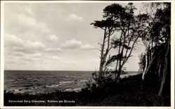 Ak Ostseebad Berg Dievenow Pommern, Kiefern am Strande, Meerpartie