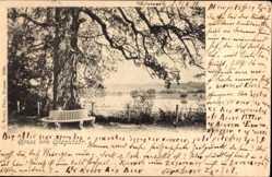 Postcard Oranienbaum Wörlitz im Kreis Wittenberg, Partie am Sieglitzer See