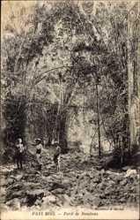 Postcard Pays Mois, Forêt de Bambous, Bambuswald, Vietnam