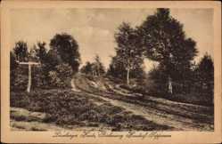 Postcard Handorf Seppensen Lüneburger Heide, Birkenweg, Heidekraut