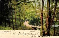 Postcard Schleswig an der Schlei, Wickeltal, Waldpartie, Bach, Brücke, Passant