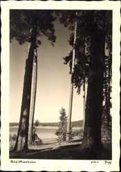 Ak Masuren Ostpreußen, Waldpartie, Blick über einen See