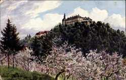 Ak Bad Wildungen, Blick auf das Schloss Friedrichstein, Kirschblüten