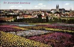 Postcard Quedlinburg im Harz, Blumenfelder, Blick auf den Ort, Kirche, Häuser