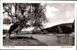 Postcard Eschwege im Werra Meißner Kreis, Partie an der Werra, schiefer Baum
