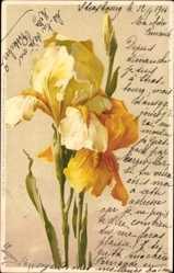 Künstler Litho Klein, Catharina, Gelbe Blüten, Blumen