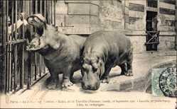 Postcard Paris Frankreich, au Jardin des Plantes, Kako, dit le Terrible, et Liza