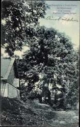 Postcard Nieder Rokitai Region Reichenberg, Rieseneiche bei Hühnerwasser, P. Gröger