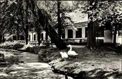 Postcard Mittweida in Sachsen, HO Gaststätte Cafe am Schwanenteich, Schwäne