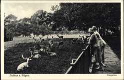 Postcard Putbus auf der Insel Rügen, Besucher im Tiergarten, Wildgehege
