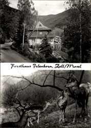 Postcard Zell a.d. Mosel, Forsthaus Irlenborn, Wildpark, Hirsche