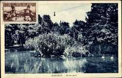 Postcard Maribor Slowenien, Mestni Park, Stadtpark, Gebüsch