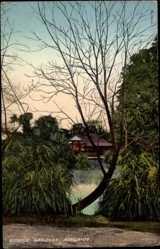 Ansichtskarte / Postkarte Adelaide Australien, Botanic Gardens, Teichpartie mit Wohnhaus