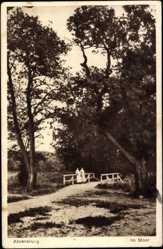 Postcard Ahrensburg Kreis Stormarn, Partie im Moor, Apotheke Bruno Haase