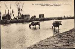 Postcard Armenohor Mazedonien, Sur les Bords de la Sakuleva, des vaches