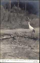 Künstler Ak Gourguet, A., Salon de 1908,Les Grenouilles demandent un roi,Frösche