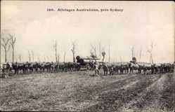 Ansichtskarte / Postkarte Sydney Australien, Attelages Australiens, Baumstammtransport, Kühe