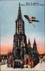 Münster, Schwalbe