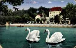 Schwäne, Teichhaus