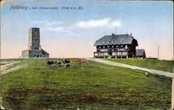 Gasthaus, Kühe
