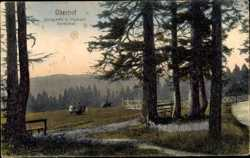 Waldpartie beim Kurhaus Marienbad