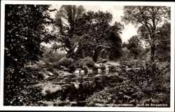 Teich im Berggarten