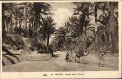 Route dans Oasis